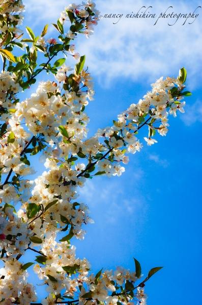 flowerznanitag